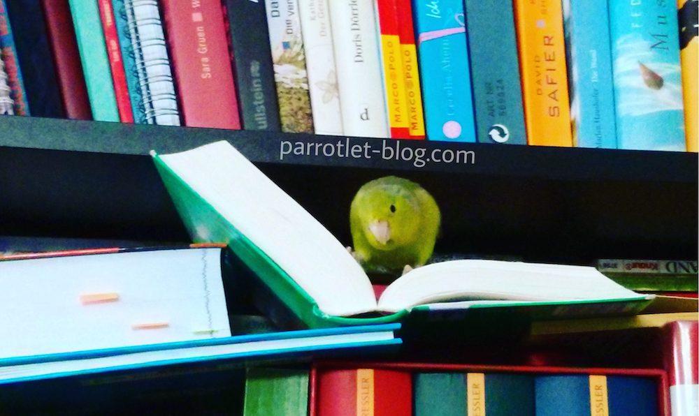 Ideas for Parrotlet Names